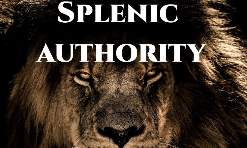 Splenic Authority – Intuitive Authority